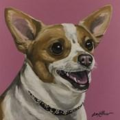 Chihuahua Bella