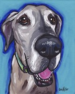 Great Dane Beau