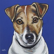 Jack Russell Buster