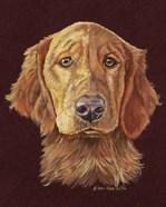 Linus Retriever Dog