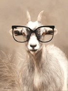 See Clearly Goat